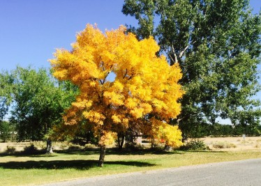 Fall in Idaho