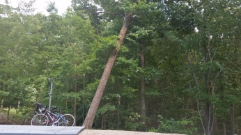 Luckily this tree was leaning away from our RV