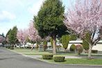 trees-w-sites147x98