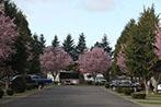 trees-w-sites4147x98